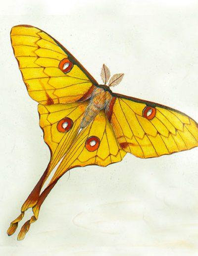 пеперуда-www